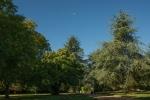 Tree Moon.jpg