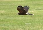 Speed Bird.jpg